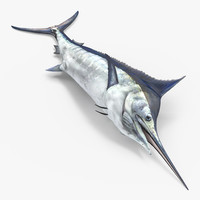 Blue Marlin Lying on the Floor