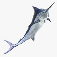 Blue Marlin Pose 3