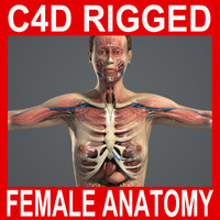 C4D MAX RIGGED Complete Female Anatomy PACK