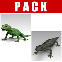 Salamander_Lizard