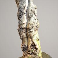 Realistic Tree Model 9