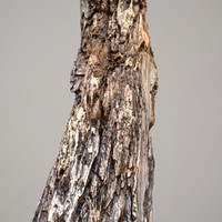 Realistic Tree Bark Model 7