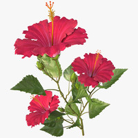 hibiscus red_branch
