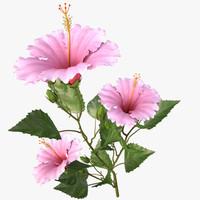 hibscus pink_branch
