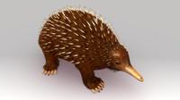 Australian Spiny Anteater