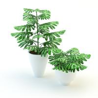 Plants Monstera