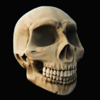 Skull - Blender3D