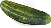Realistic Cucumber 33