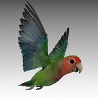 Lovebird Animated