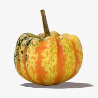 Carnival Squash Pumpkin