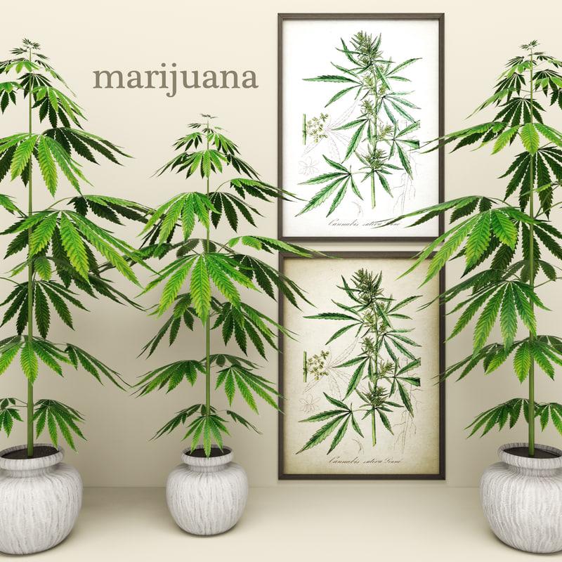 plant 00.jpg