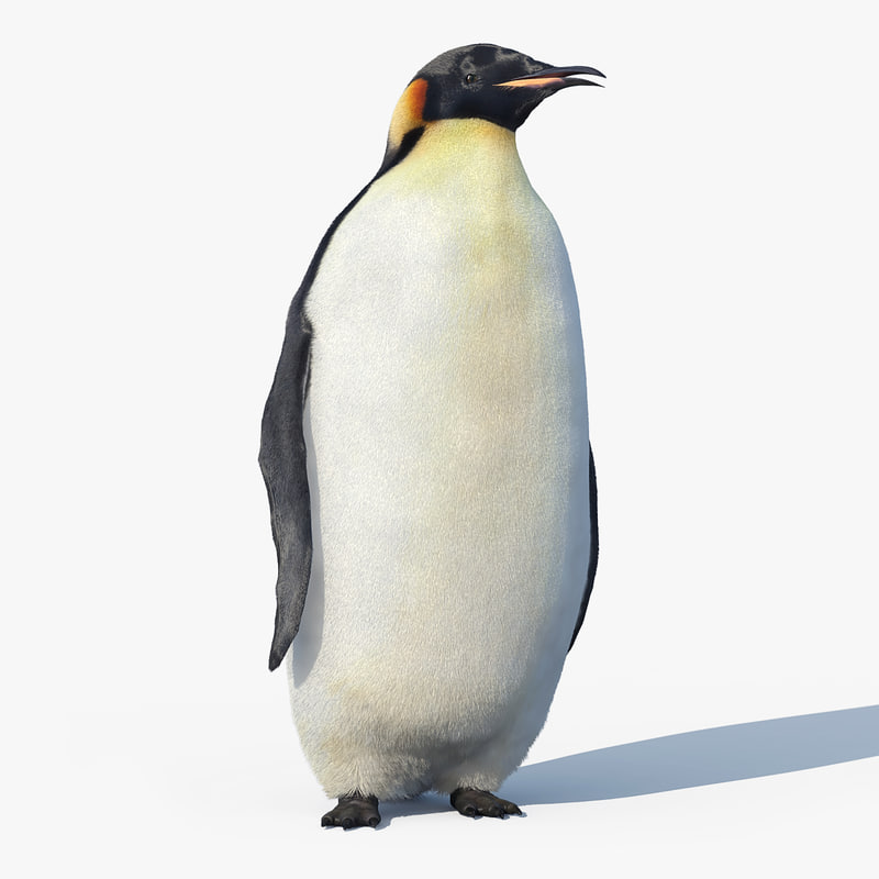 penguin_FUR_RIGGED_01.jpg