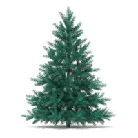 Blue Spruce (Picea pungens) 1.4m