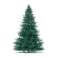 Blue Spruce (Picea pungens) 2.2m