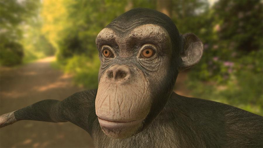 Chimpanzee Pixinac.jpg