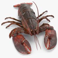 Lobster Pose 2