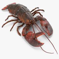 Lobster Pose 3