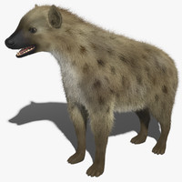 Spotted Hyena Fur
