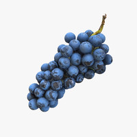 Grapes Hanging Realistic