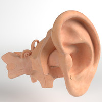 max pbr uv-textured human ear