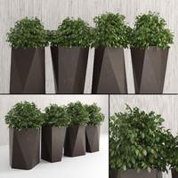 Plants for Indoor & Outdoor II