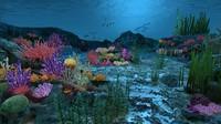 Ocean floor coral reefs