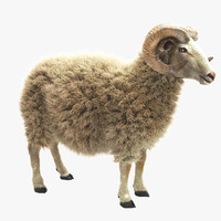 Ram (Sheep)