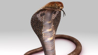 3d naga snakes