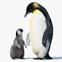 Emperor Penguin GROUP(FUR)(RIGGED)