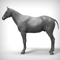 3d horse ztl zbrush