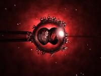 IVF Egg Cell