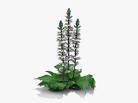 Grecian Pattern Plant (318)