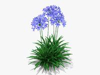 Agapanthus Monmid Flower (326)