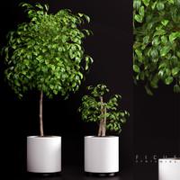 plants 70