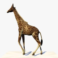 Animated Giraffe Walking