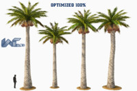 3d palm washingtonia tree