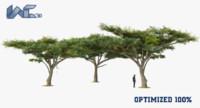 3d tortilis tree model