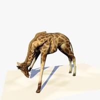 Animated Giraffe Eating Grass