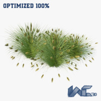 fountain grass 3d model