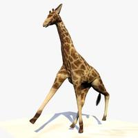 Animated Giraffe Running