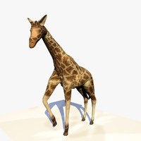 Animated Giraffe Standing
