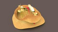 3d mollusca animals molluscs model