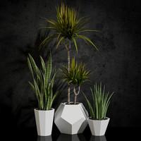 room plants 03
