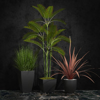 room plants 06