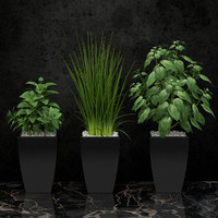 room plant 08