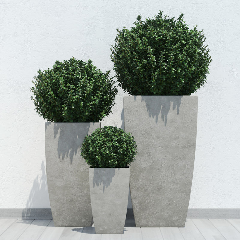 plant_13.jpg