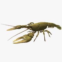 Crayfish (Animated)