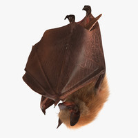hanging bat fur 3d model