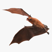 Bat Rigged