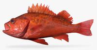 Sunset Rockfish 2